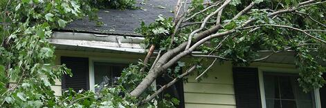 People often wonder if fallen trees are covered by insurance.  Photo Courtesy of Safeco Insurance